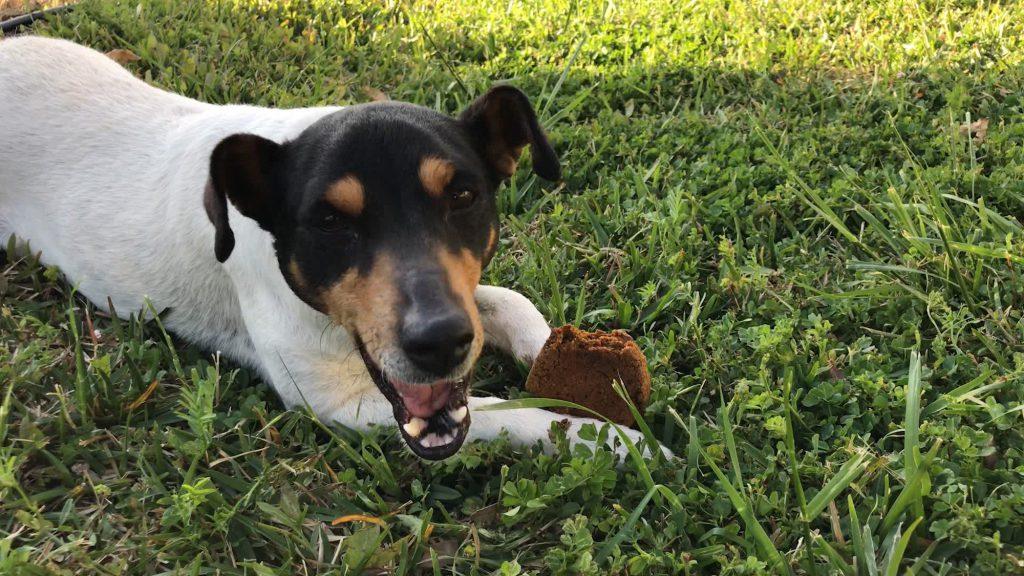 Hund isst Kekse.