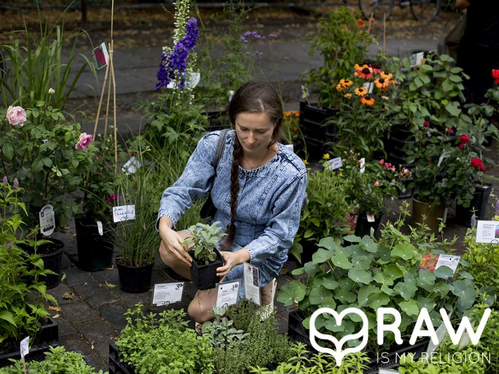 Bio Kräuter kaufen, aufbewahren, ziehen und verwenden.