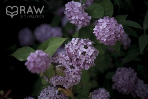 Lilacy Flower