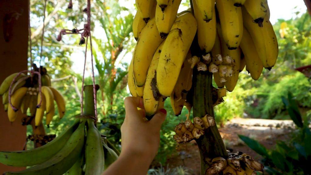 Was ich in Costa Rica gegessen habe.