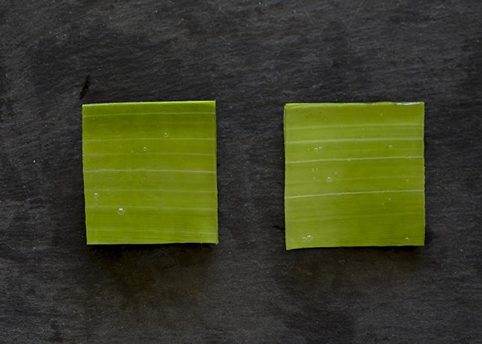 aloe vera blatt aufgeschnitten naturkosmetik