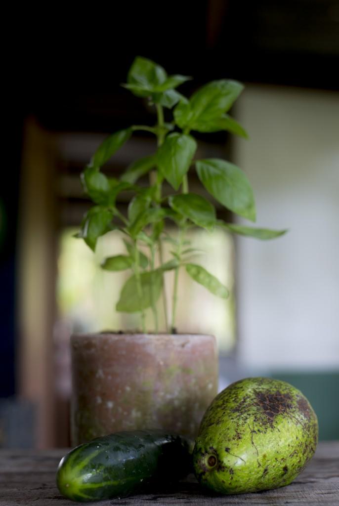 Avocado Sauce Rohkostnudeln Gurkennudeln vegane Sauce