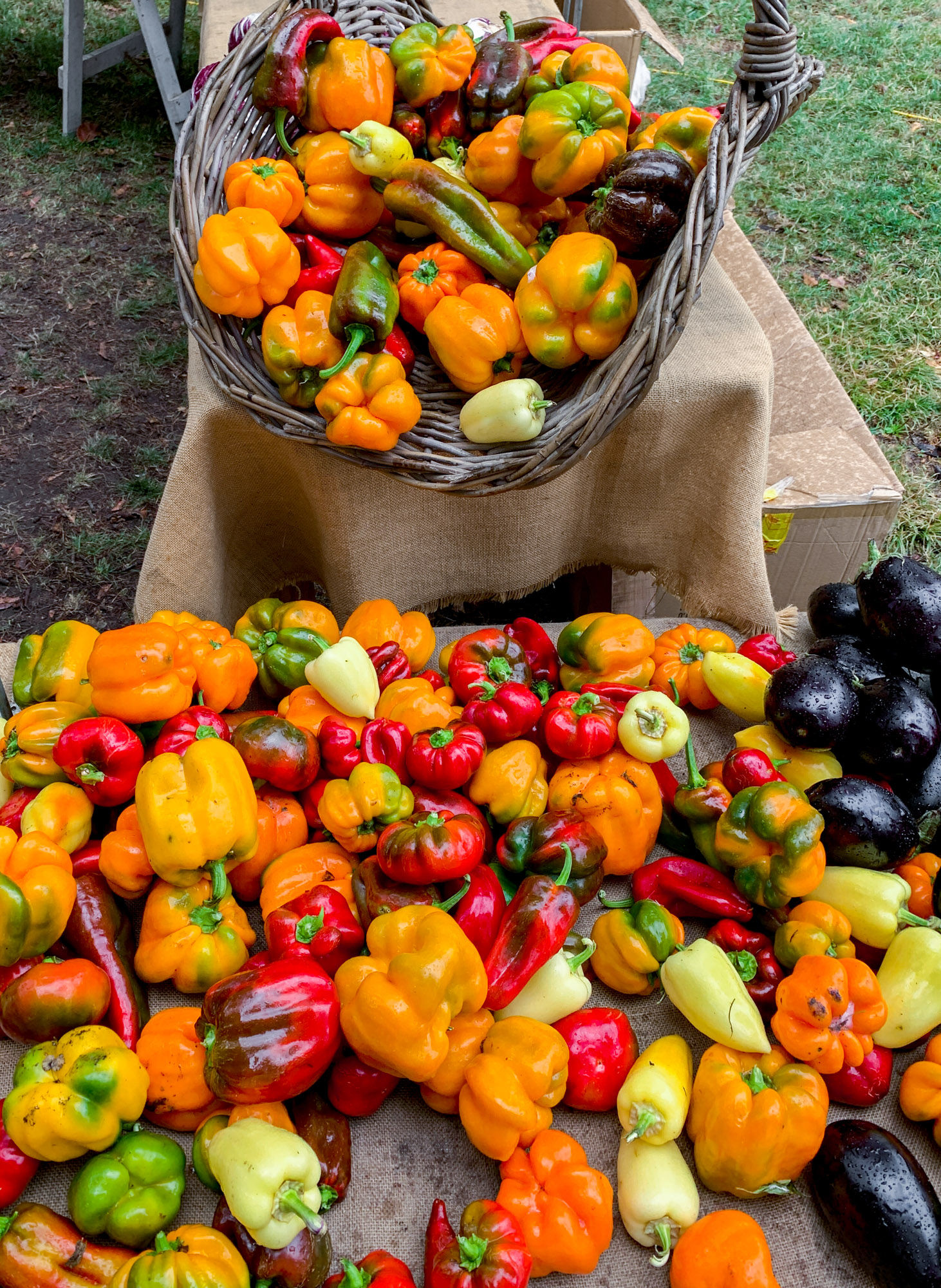 Vegane Rohkost Rezepte mit bio Paprika.