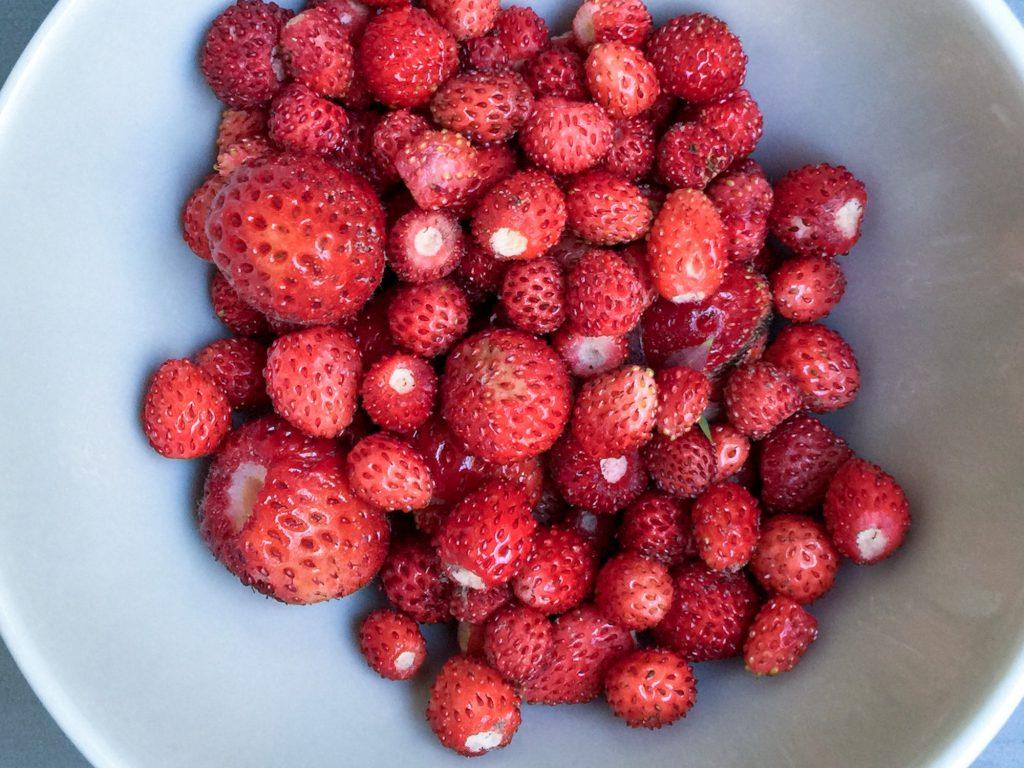 Süße aromatische Erdbeeren aus dem Garten.