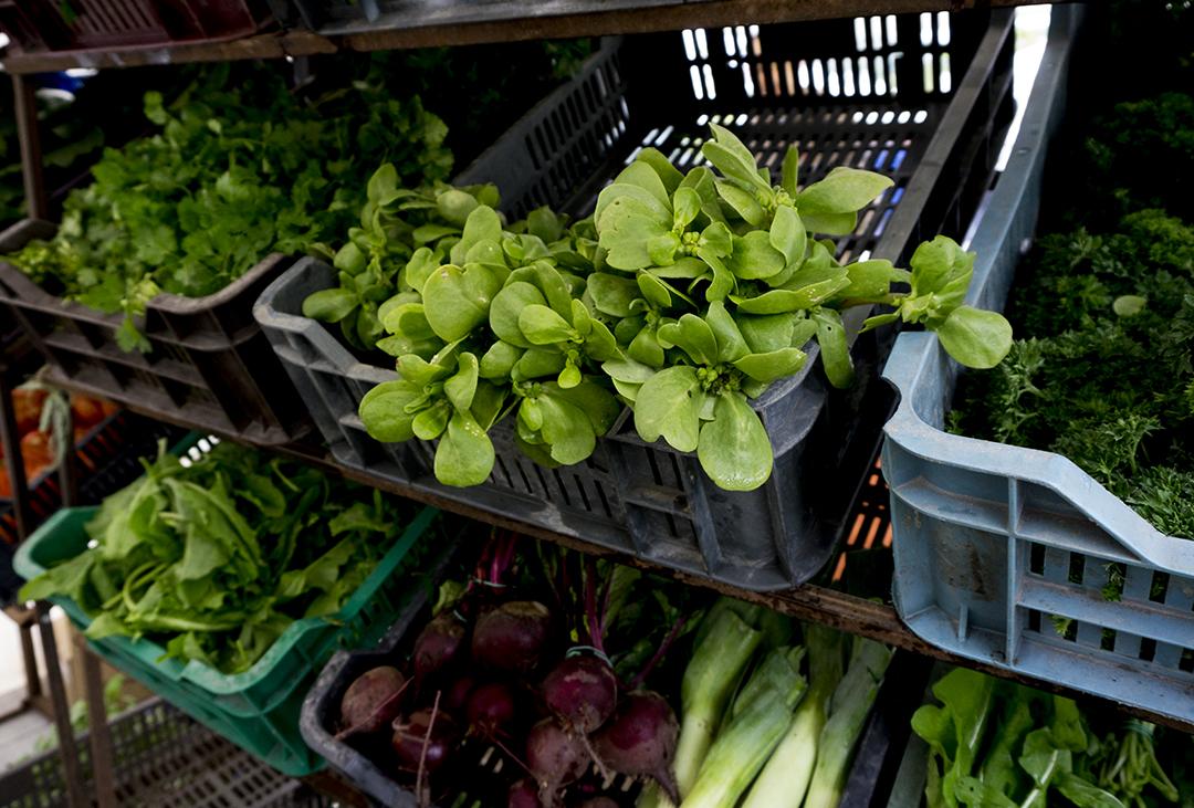 farmersmarket organic peaches fruit mom park organic market budapest purslane greens salad