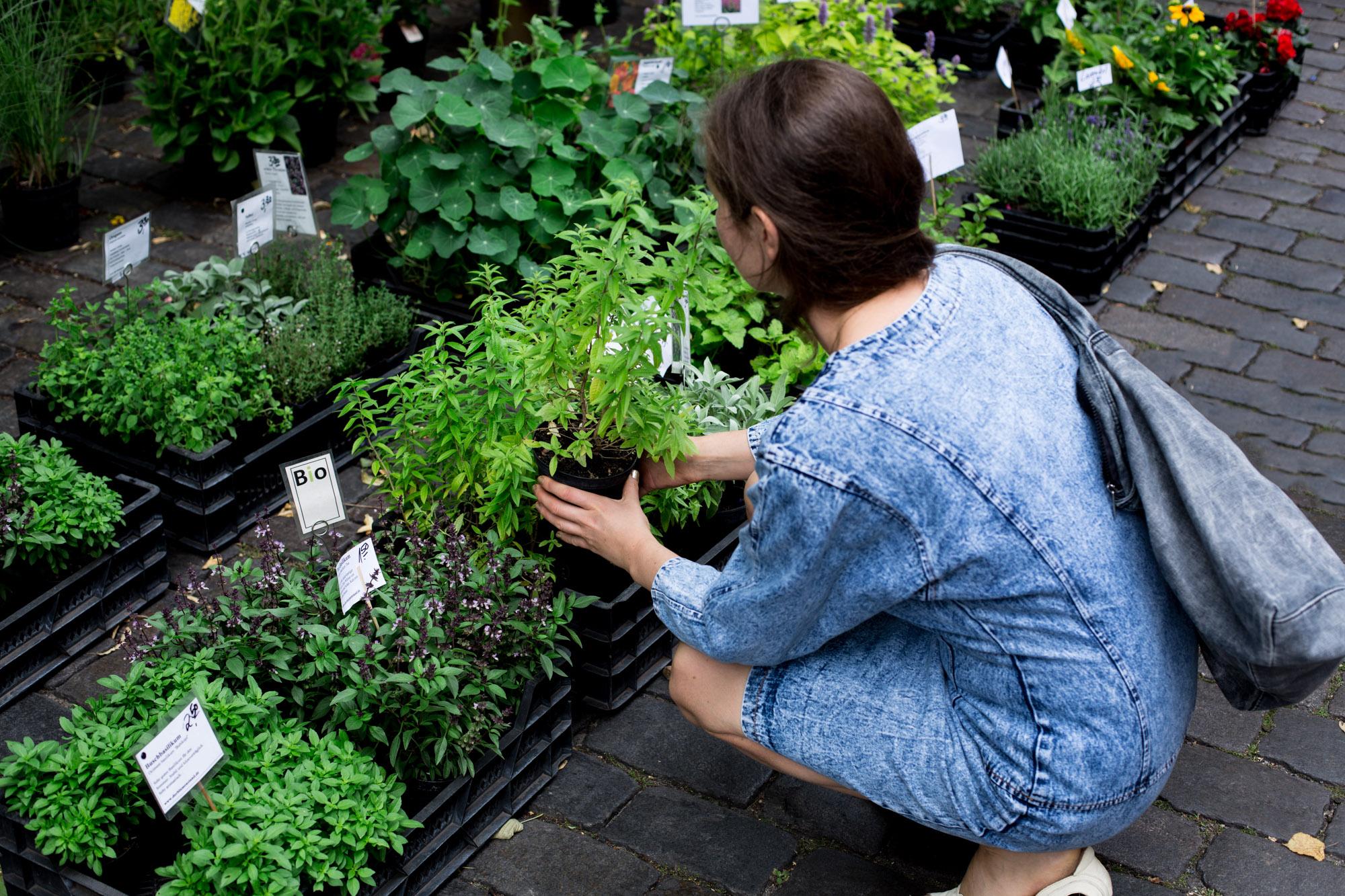 Bio Koriander Rohkost Vegan kaufen.