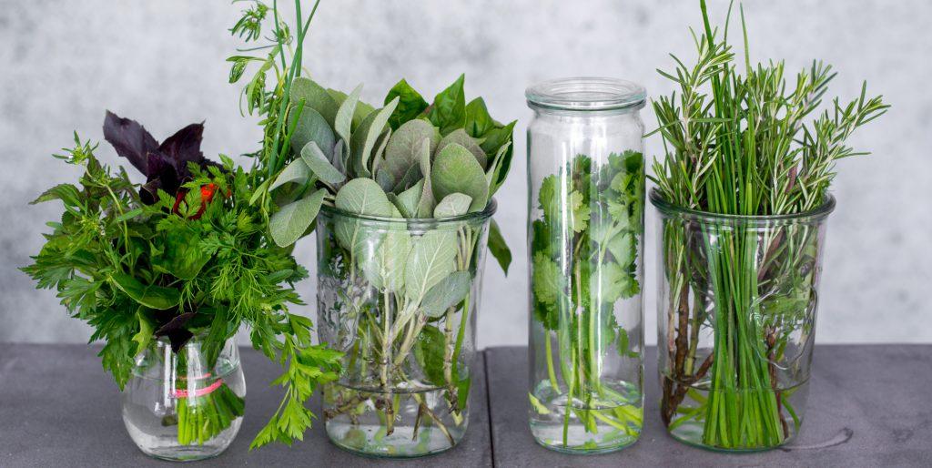 raw vegan recipes with organic cilantro