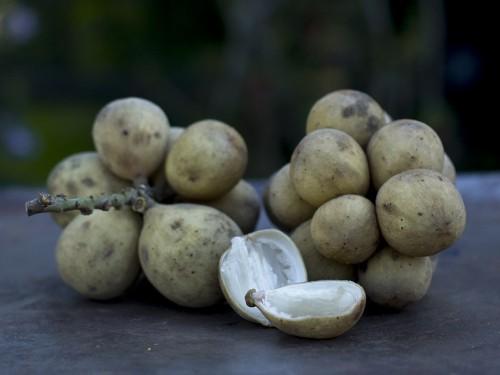 lanzones lanzon fruit fruitporn love organic thailand