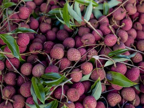 lychee hawaii fresh fruit