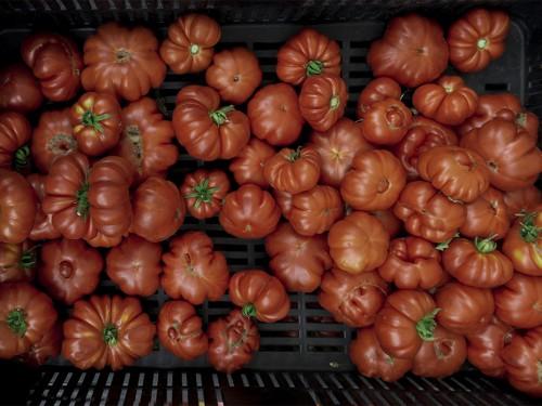 mom park organic market budapest tomatoes organic