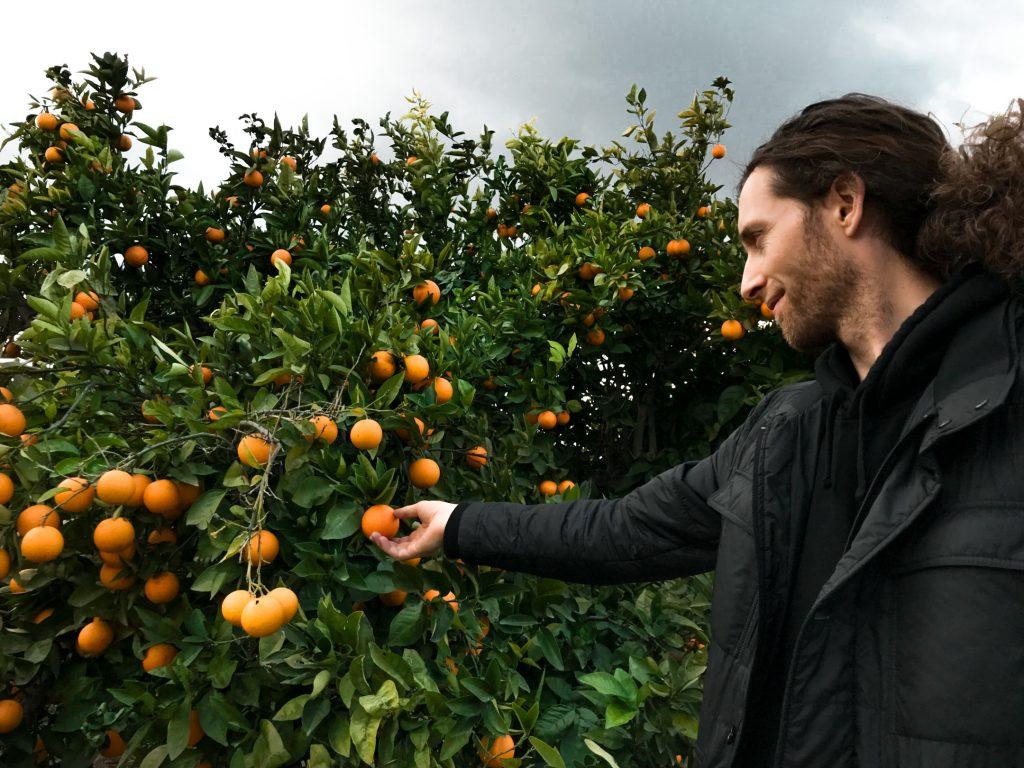 bio orangen für rohkost gerichte