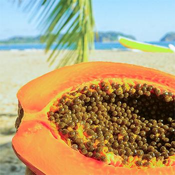 papaya wp