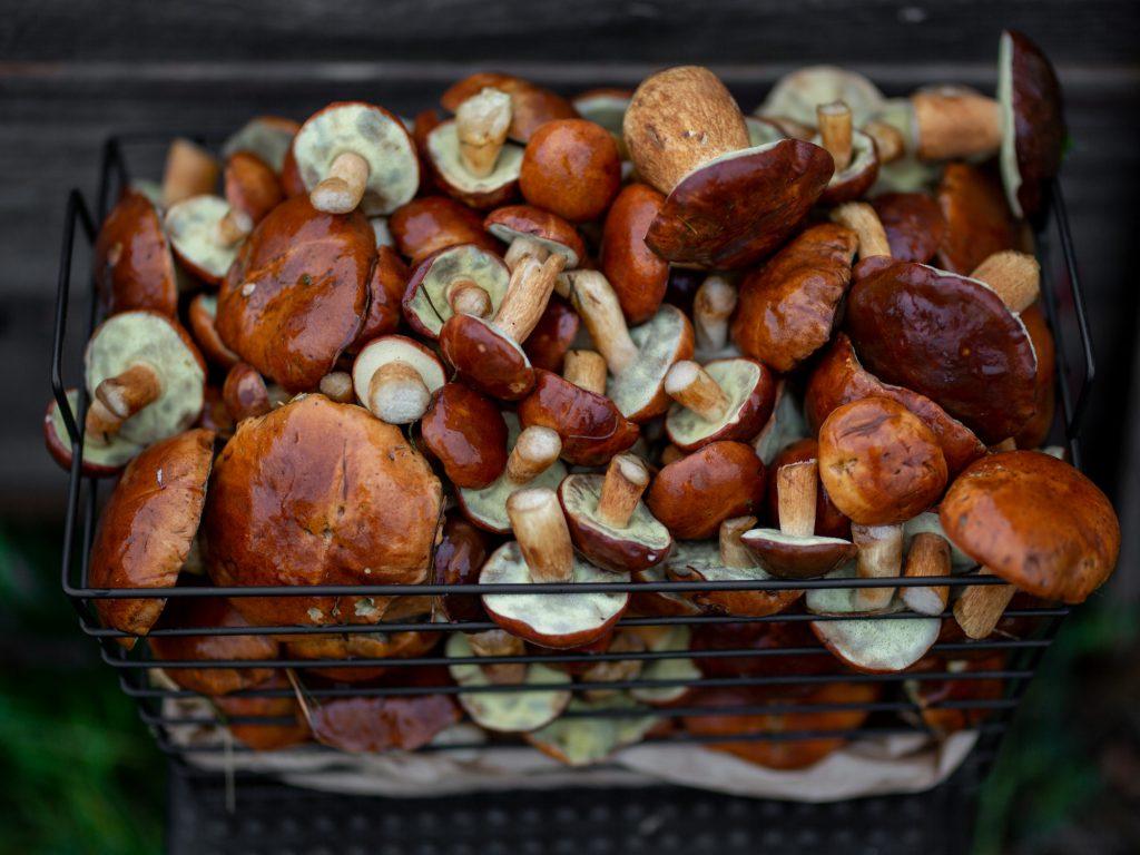 pilze aus dem wald selbstgesammelt