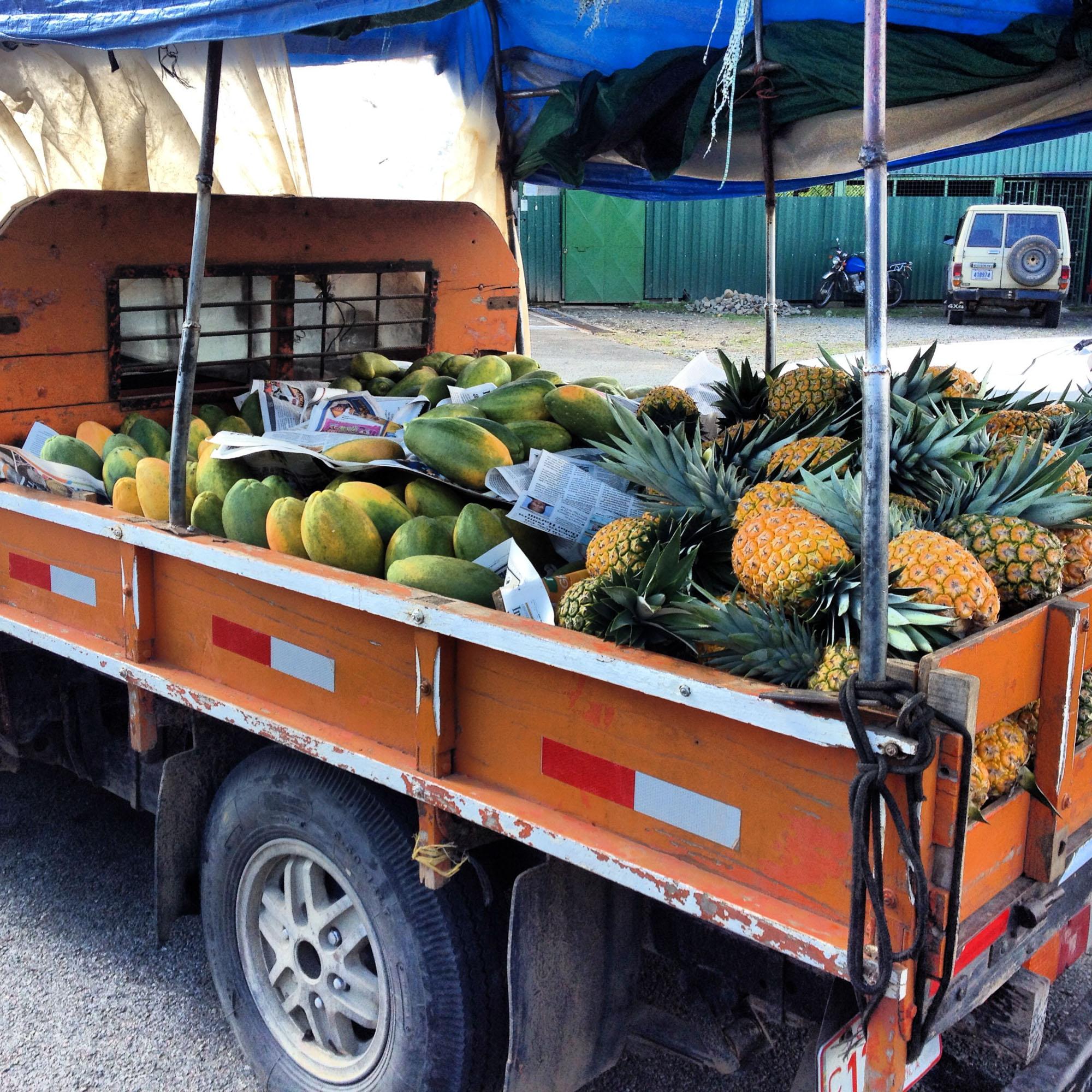 Ananas wie wächst eine Ananas.