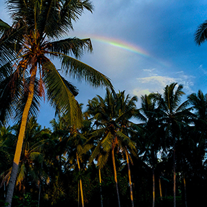 rainbow bali palm trees