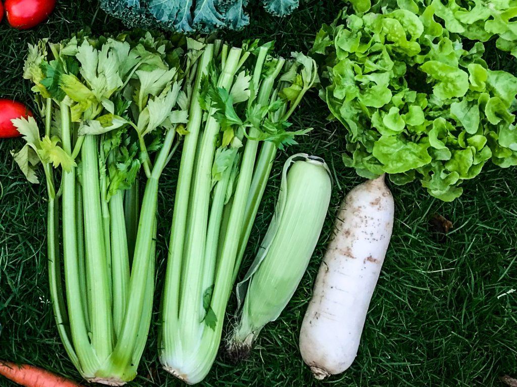 Bio Rettich für vegane Rohkost Rezepte.