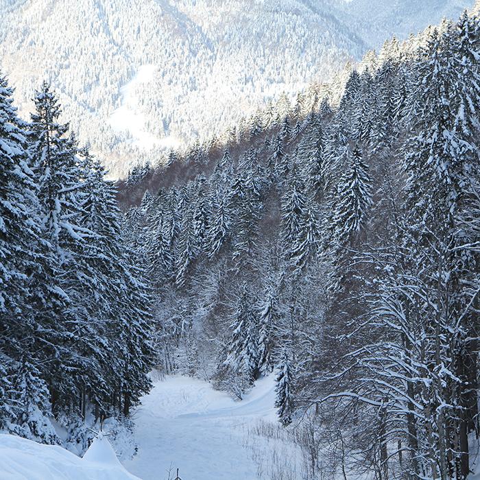 schnee berg rodeln