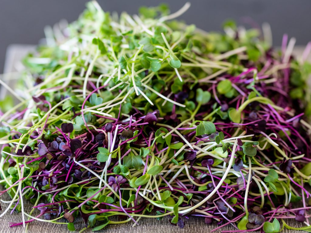 Sprouting organic sprouts and using sprouts in raw vegan recipes.