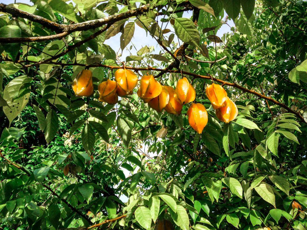 Süße oder saure saftige Frucht.