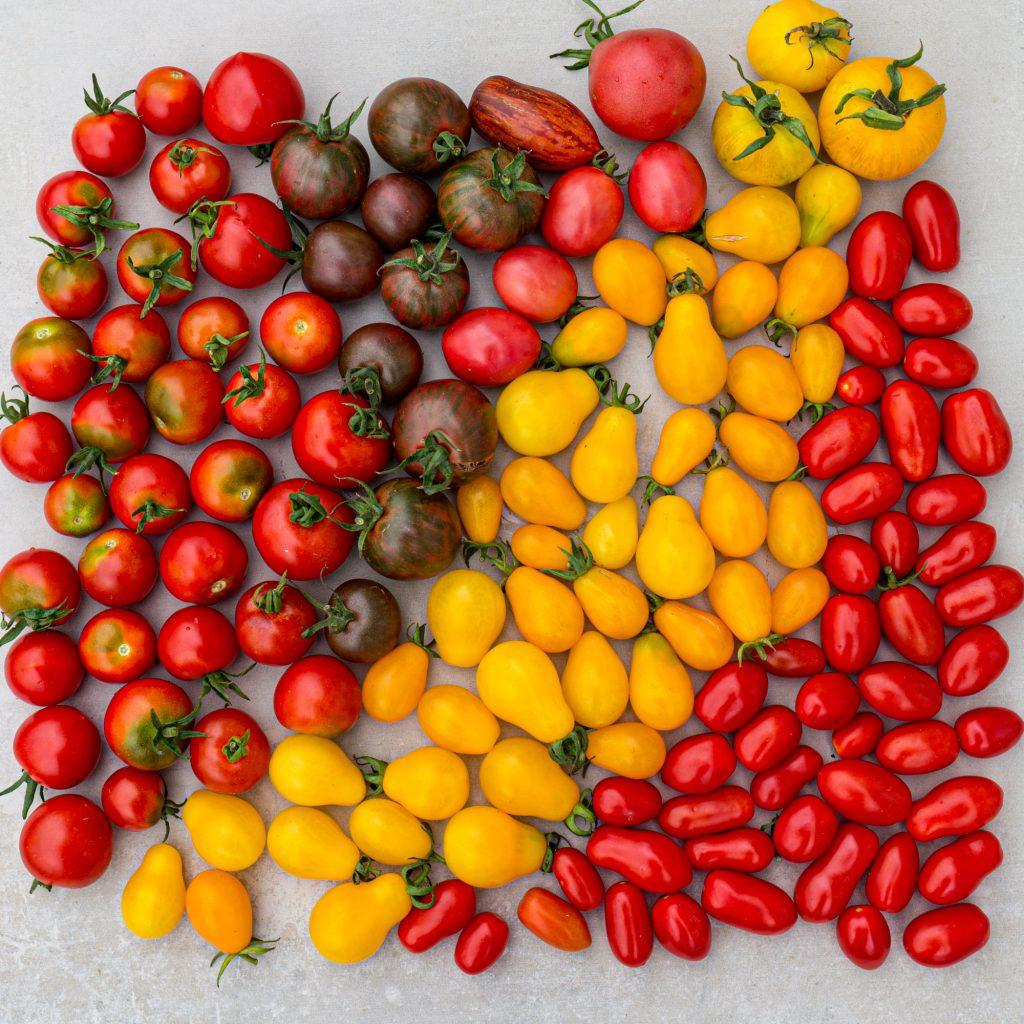 Organic cherry tomaten for raw vegan recipes.