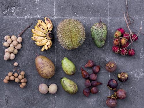tropical fruit test topenfruechte rambutan durian guanabana longan
