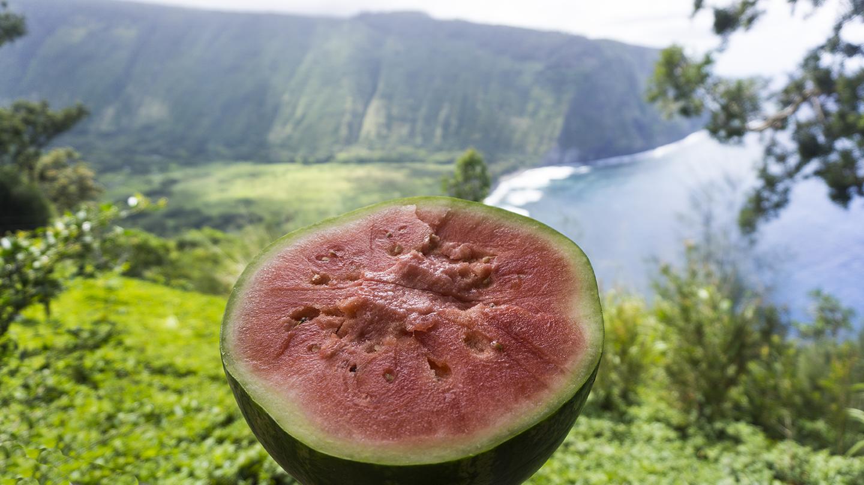 watermelon waipio
